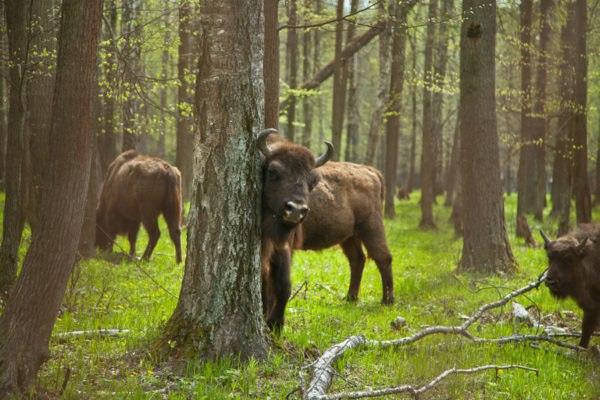 Приокско-Террасный заповедник история, животные, фото