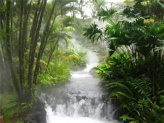 Тропические леса виды и типы, характеристика и особенности, животные, растения, климат, фото