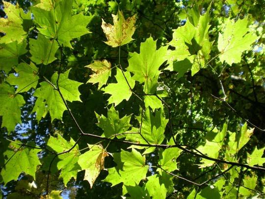 Смешанный лес описание, растения и животные, фото