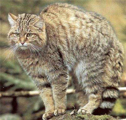 http://animals-wild.ru/uploads/1275674559_b9796bd5b5df.jpg