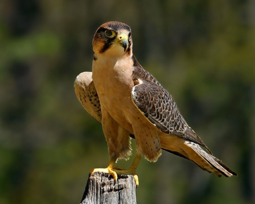 http://animals-wild.ru/uploads/1299757348_1263652070_bird_of_prey30_1280x1024.jpg