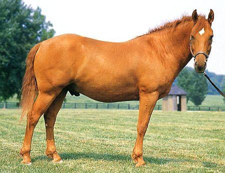 Башкирская лошадь фото