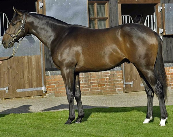 Чистокровная верховая порода лошадей фото