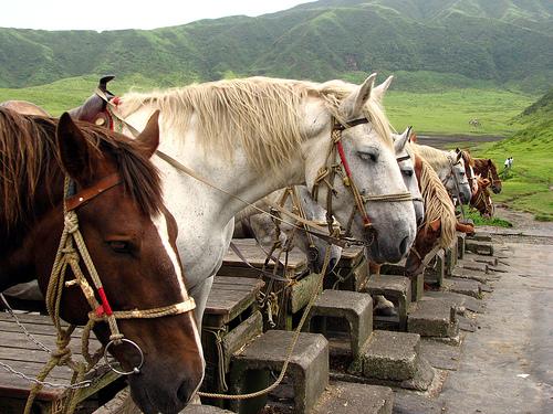 Породы японских аборигенных лошадей фото
