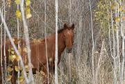 Киргизская порода лошадей фото