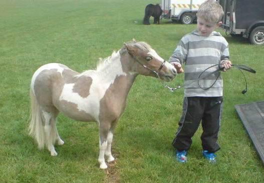 Американская миниатюрная лошадь фото
