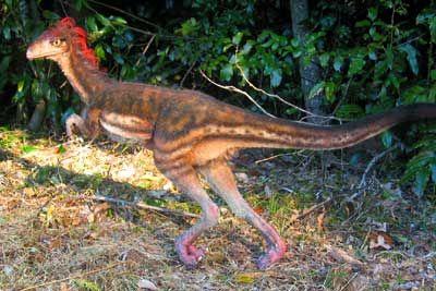 Синозауроптерикс