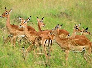 животные газели фото