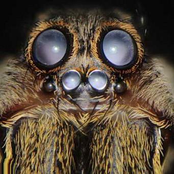 Тарантул паук фото