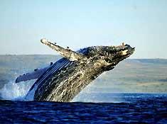 синий кит фото