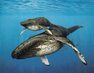 синий кит с детенышем фото