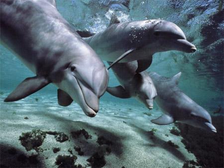 дельфины афалины фото