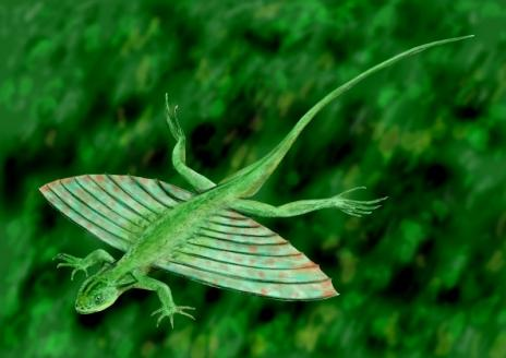 летучий дракон фото