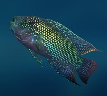 Лучеперые рыбы фото