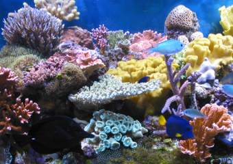 кораллы фото