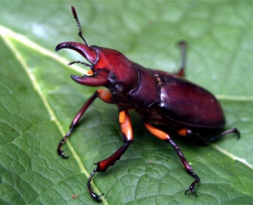 жуки фото