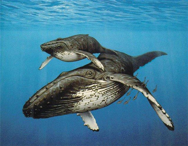 киты фото