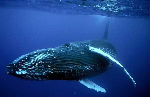 кит фото