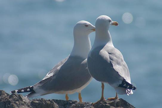 птицы чайки фото