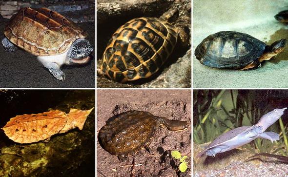 черепахи фото