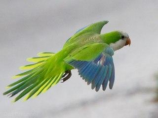 птица калита фото