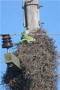 попугаи строят гнездо фото