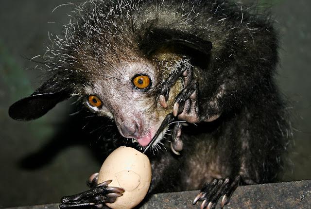 руконожка с едой фото