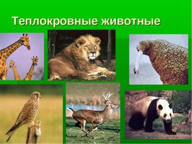 Теплокровные животные фото