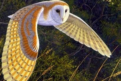 Обыкновенная сипуха фото