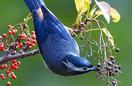 Пищеварительная система птиц фото