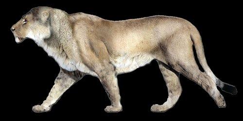 американский лев фото