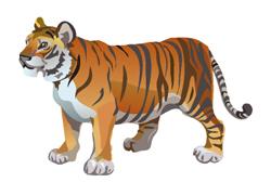 Балийский тигр фото