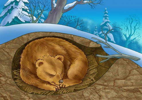 медведь в берлоге фото