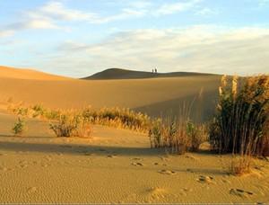 монгольская гоби фото