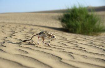 пустыня Гоби фото