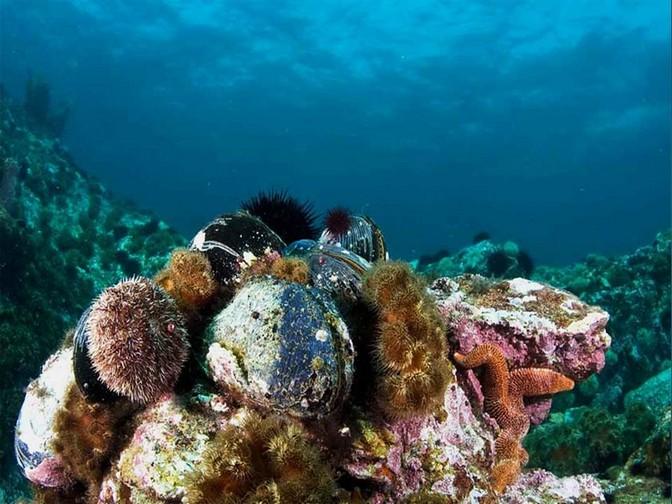 Дальневосточный морской заповедник фото