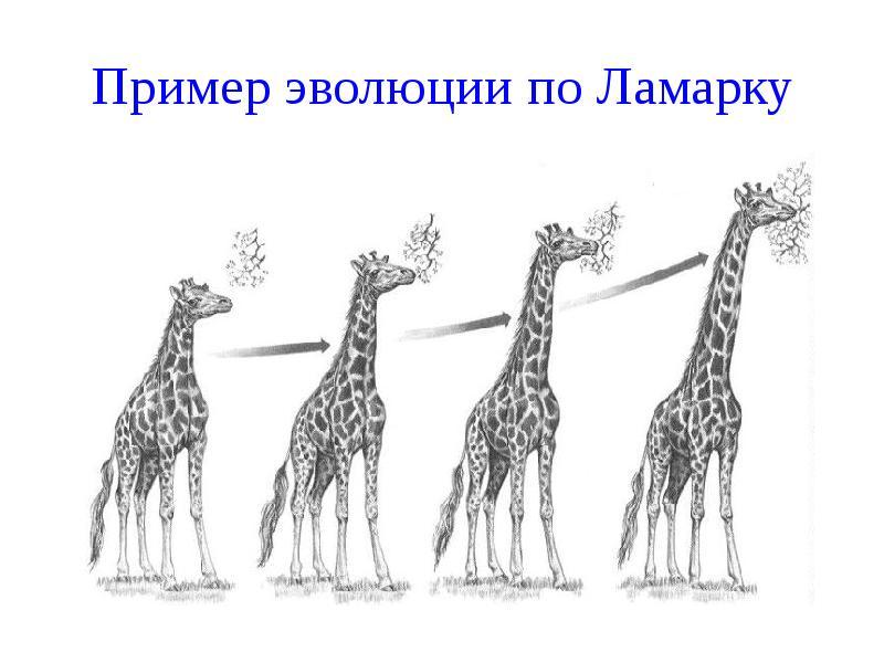 Эволюция по Ламарку фото