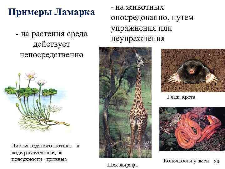 Эволюция по Ламарку