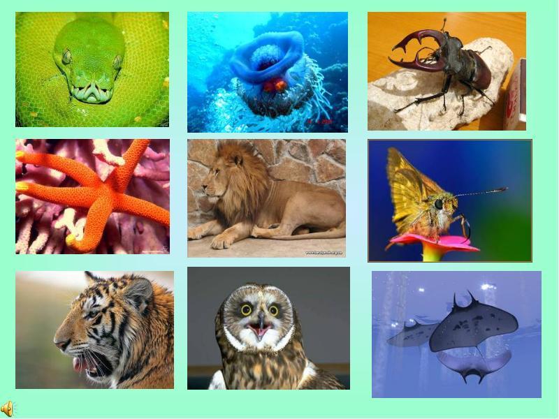 Царство животных фото