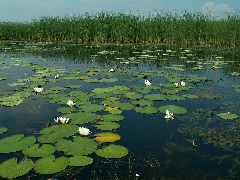 водная среда фото